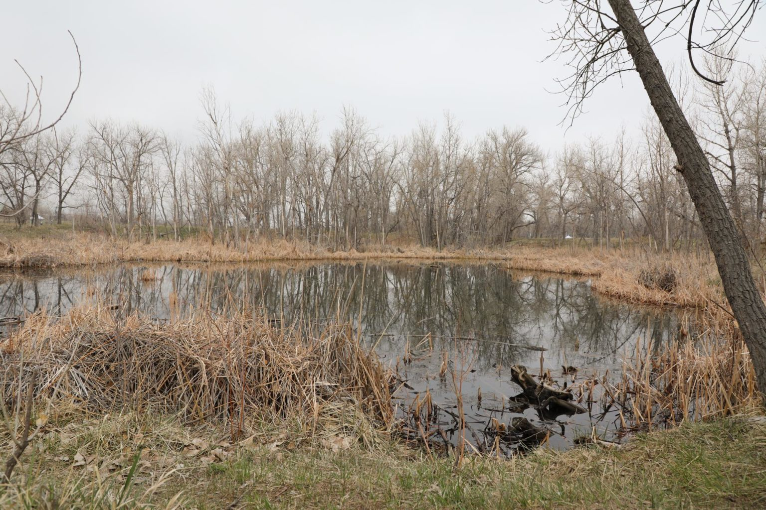 Pond At Morrison Nature Center At Star K Ranch
