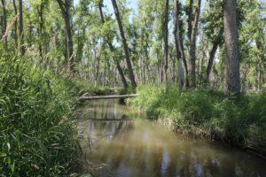 Cherry Creek State Park Wetland Preserve Trail